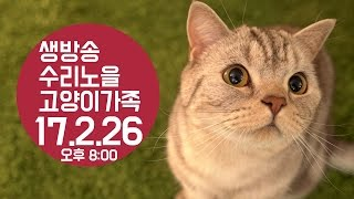 수리노을 LIVE ] 17/2/26(일) 8PM 5마리 고양이가족 방송【SURI&NOEL】