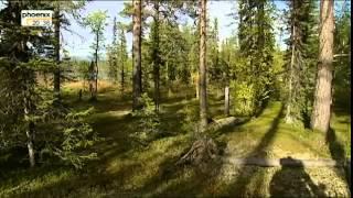 Europas Urwälder 1/5 Unberührtes Lappland Doku