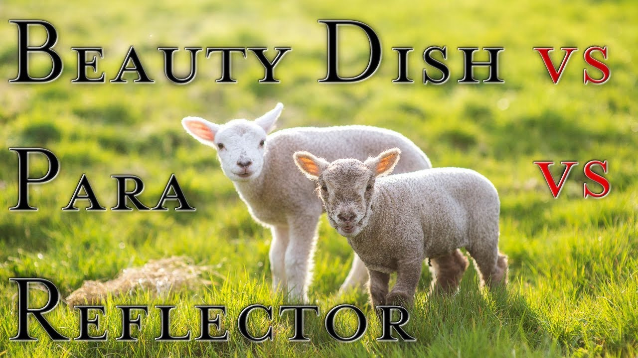 """a comparison of the lamb and pied beauty Pied beauty the poem """"pied beauty"""" written by gerald manley hopkins on the theme of praising the beauty and diversity of nature, it is almost like a hymn of creation, praising god by praising the created world."""