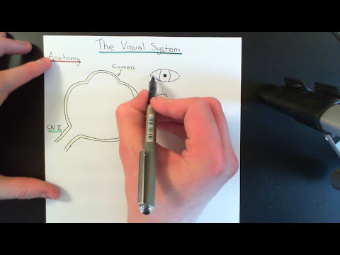 The Visual Pathway Part 1