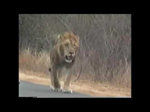 Kruger Park 2002