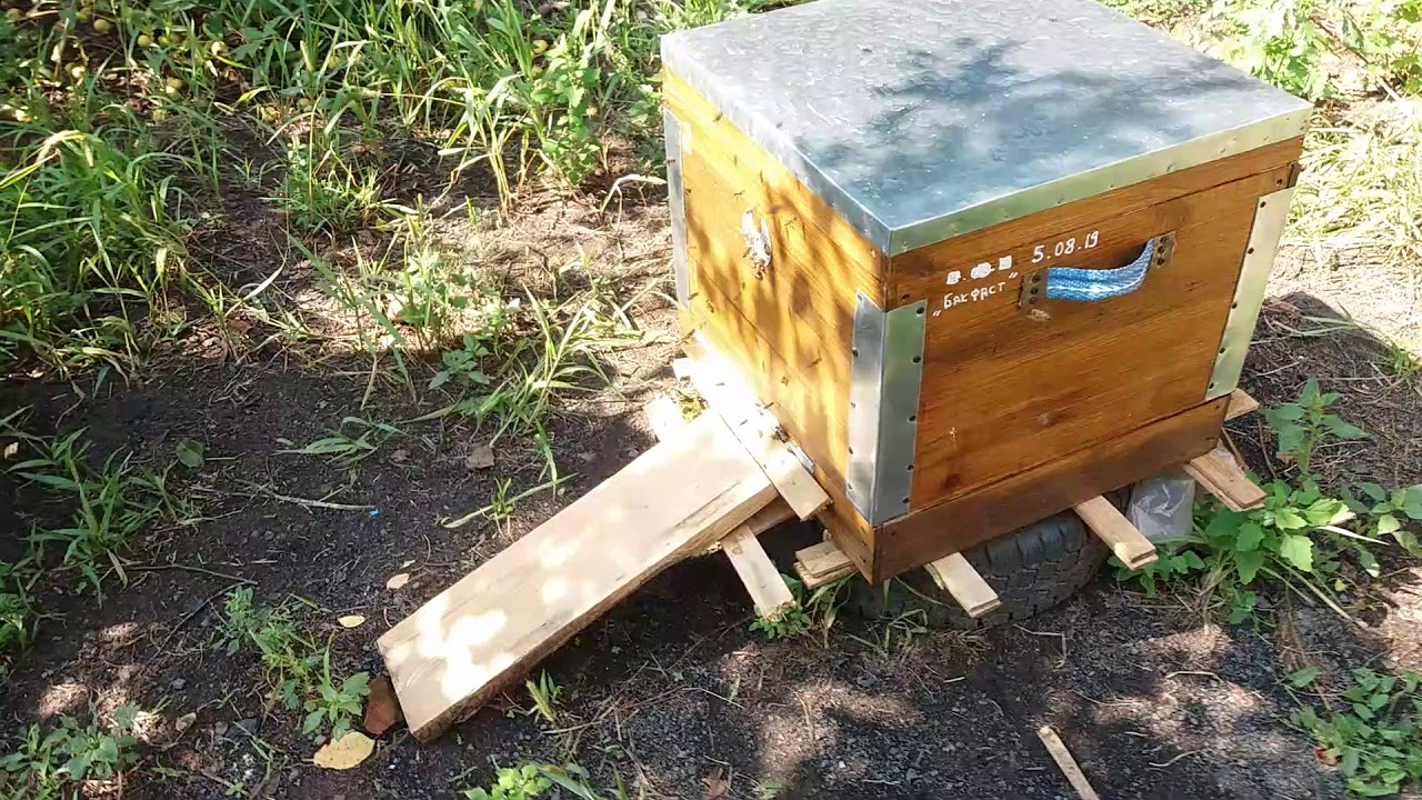 Пчёлки 😊