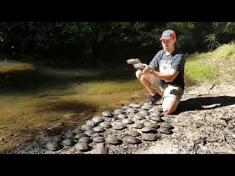 Turtle Rescue - Western Sydney