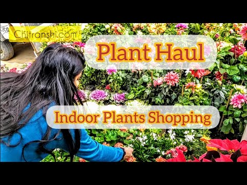 Plant Haul Shop with me | Plant Nursery Tour | Houseplants | Indoor Plants Shopping | Indian Vlogger