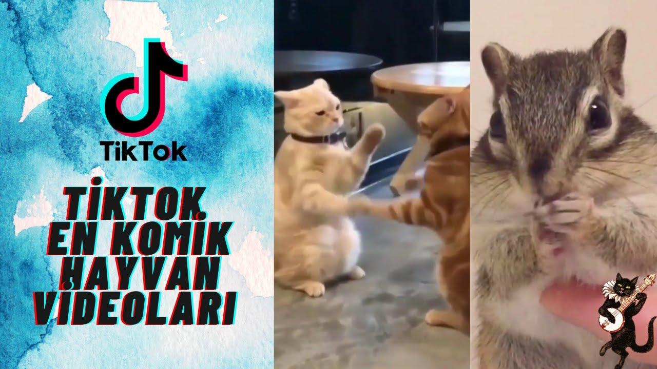 Viral Tiktok Komik Hayvan Videoları