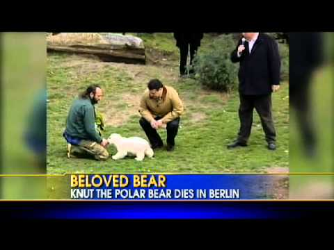 What Killed Knut the Polar Bear?