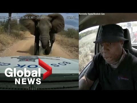 Dashcam video shows moment elephant charges at truck in South Africa