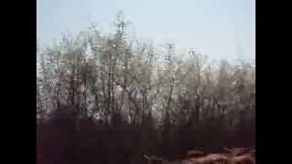 Convoyage de salers près du gîte à Cerilly dans l'Allier