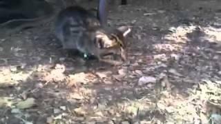 Reggae Cat (RiseUp Movie)