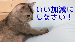 関西 弁 猫 しゃべる 関西弁をしゃべる犬