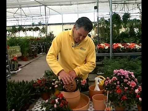 El jardinero en casa petunias doovi for Jardinero en casa