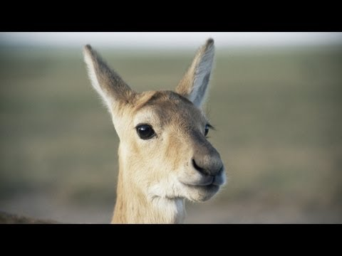 PLANET EARTH Uncut: U.S. Premiere of the Original Version Only on BBC America
