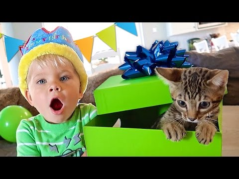 BIRTHDAY KITTEN SURPRISE! - Ollie's 3rd Birthday Special