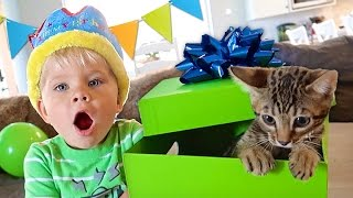 One of Daily Bumps's most viewed videos: BIRTHDAY KITTEN SURPRISE! - Ollie's 3rd Birthday Special