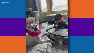 Most Buffalo: 'national Dress Your Pet Up Day'