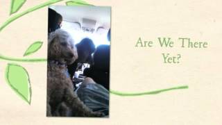 May 2014 California to MA - Exec Pet Transportation