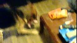 mon grou bb chien grancon