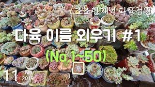 [이름외우기#1] 베란다 다육 이름 읽고 외우기(50종)/Learning succulent names/多肉植物の名前覚える
