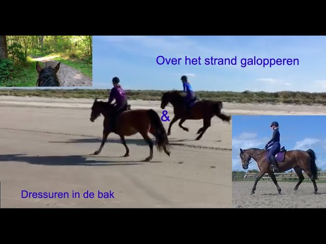 Follow me around! Een dag op stal bij Le Cheval.