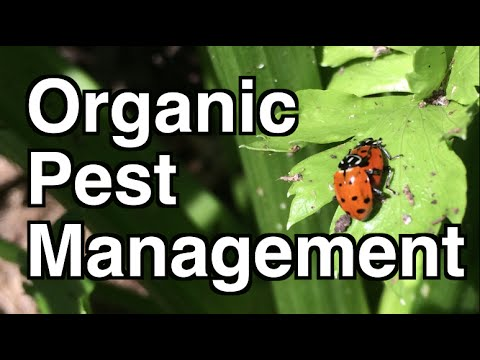 Managing Pests Organically in Vegetable Gardens and Orchards
