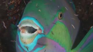 Bunaken Night Dive HD