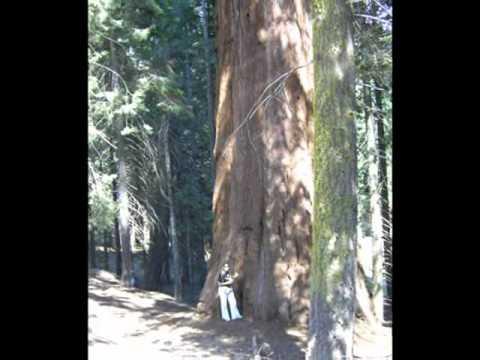 Foto usa  San Francisco, Yoseminte National Park, Sequoia Nationa Park, Las Vegas