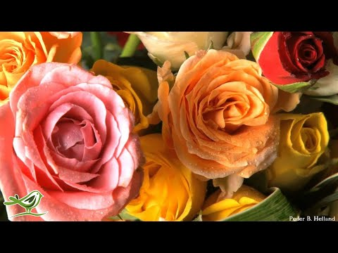 Romantic Valentine's Day Music | Piano & Guitar | Instrumental Love Music