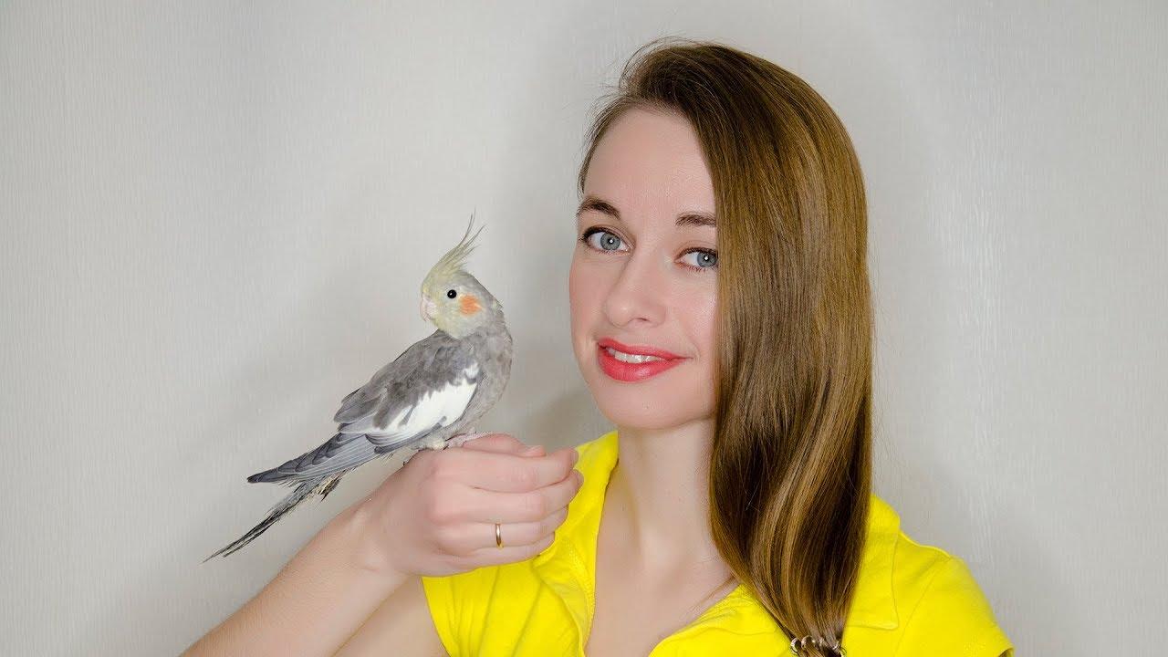 Как приручить попугая-кореллу