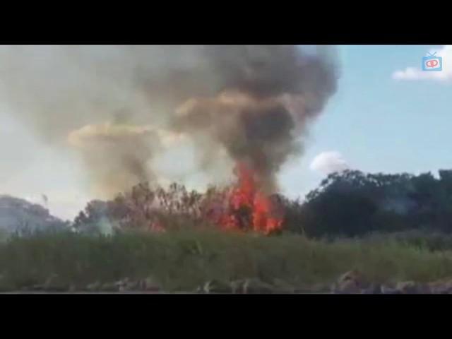 Polícia Federal erradica 234 mil pés de maconha em Salgueiro