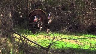 Turkey THUGS - Youth Season in Alabama