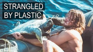 Norwegian sailor saves 4 sea turtles trapped in plastic fishing nets.