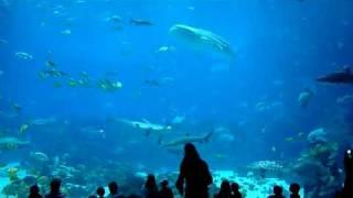 The Largest Aquarium in the World - Georgia Aquarium