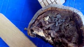 Литьевая форма из древесного гриба #1