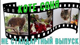 Приколы с Котами. Коте Соня  Сборник номер Один