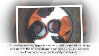 Phoenix AZ Mold Removal & Remediation Services | Arizona Asbestos Removal
