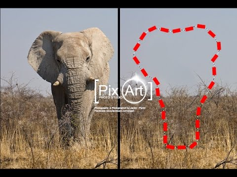 Adobe Photoshop - ช่วยด้วยครับช้างผมหาย!! รีทัชภาพ ลบวัตถุออกใน 5 วินาที ง่ายขนาดนี้เลยเหรอ