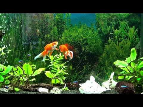 Freshwater Aquarium 2D HD