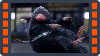 Ньют ловит Нюхлера — Фантастические твари и где они обитают (2016) сцена 3/7