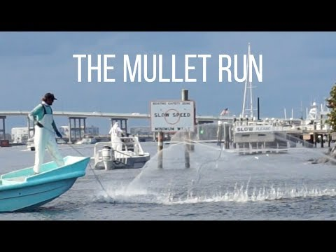 The Mullet Run | Palm Beach Inlet