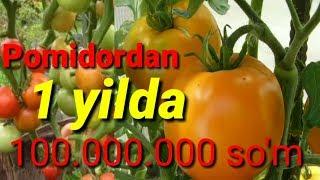 PARNIKDAN 100 MILLION TOPSA BO