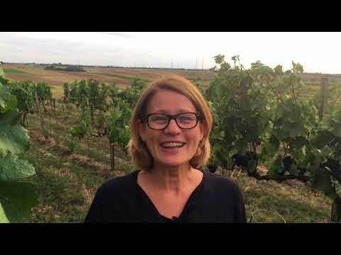 Blaufränkisch wine & food pairing - with Austrian winemaker Dorli Muhr