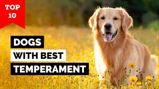 Top 10 Dogs With Best Temperament