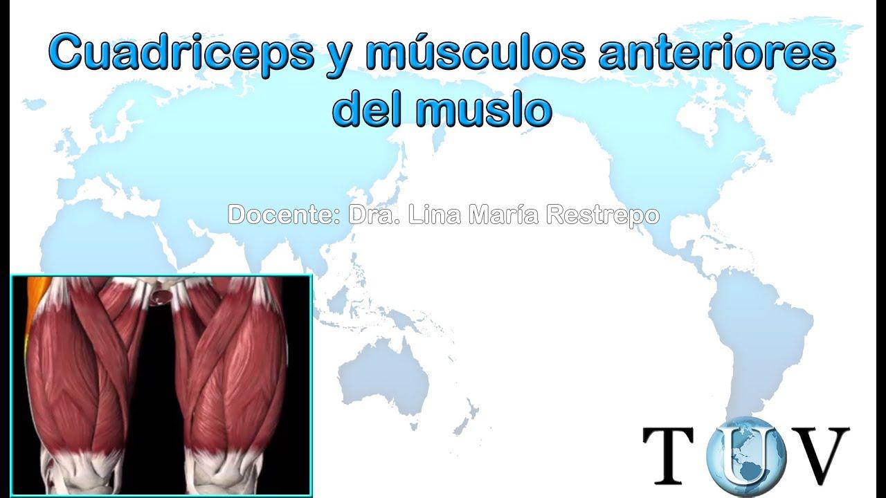 Músculos del cuadriceps y porción anterior del muslo - YouTube