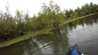 Frog Fishing for Largemouth Bass on California