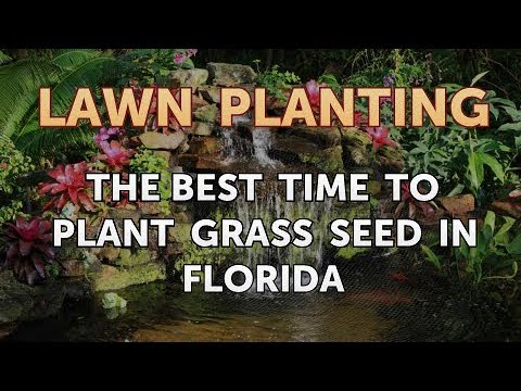 The Best Time To Plant Gr Seed In Florida
