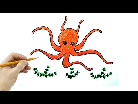 Vẽ Tranh Con Bạch Tuộc - How To Draw The Octopus