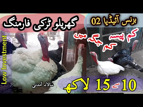 Turkey Bird Farming at Home in Low Investment and Limited Space l Farming Business Ideas