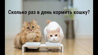 Сколько раз в день кормить кошку?