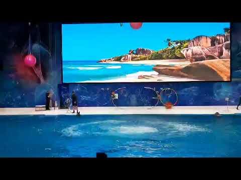 Dolphin show @ Dubai Dolphinarium 🐬🐳🐋 🌊