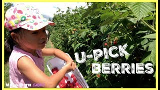 U-Pick Berries - Krause Berry Farms | Family Vlog With EMMA
